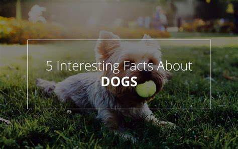 10 Facts About Dogs by Dogs Facts 5 Amazing Facts About Which We Really
