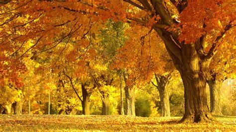 imagenes de paisajes otoño invierno fondo pantalla paisaje de oto 241 o