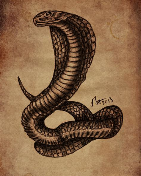 viper tattoo designs cobra sketch by cadaversky on deviantart