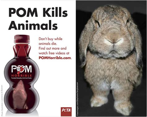 According To Peta All Animal Skin Is The Same by 35 Things That Aren T Happening Today Because Of Peta Peta