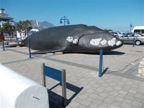 whale house 20160312 134343 large jpg picture of the whale house museum hermanus tripadvisor