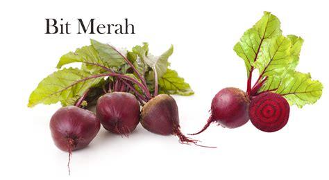 Qslim Pelangsing Alami Untuk Diet Sehat makanan sehat untuk diet sehat alami obat pelangsing herbal