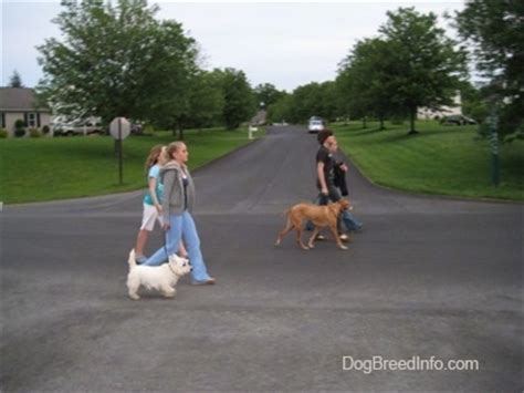 how to your to walk next to you the walk the proper way to walk your walking