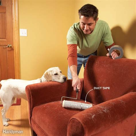 removing dog hair from couch 14 cleaning tips every dog or cat owner should know the