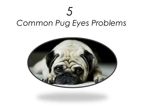 pugs problems 5 common pug problems