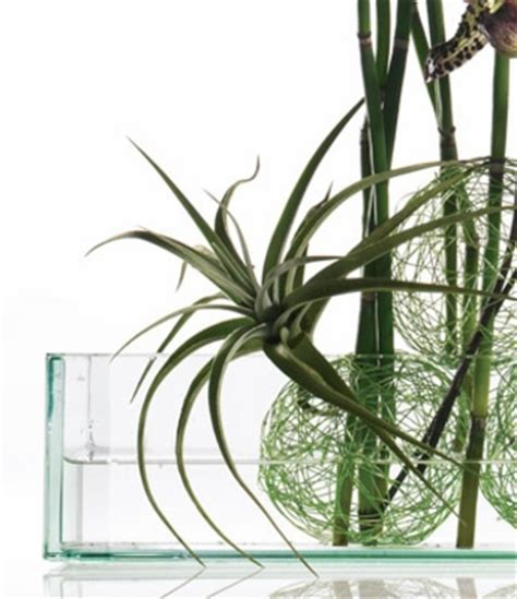 clear glass containers for centerpieces 12 fiji clear glass 4in bottles 6oz