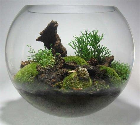 fish bowl terrarium miniature garden
