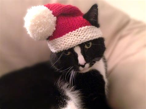 hats for cats knitting patterns knit a sweater hat collar or scarf for your