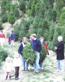 patchen california christmas tree farms cut your own