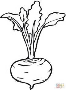 beet color dibujo de remolacha realista para colorear dibujos para
