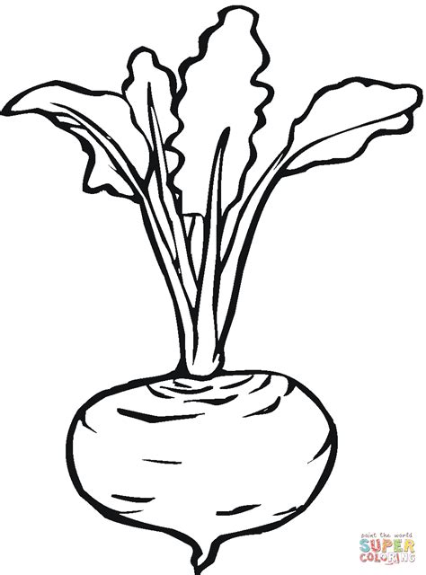 beet color beetroot 7 coloring page free printable coloring pages