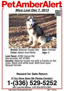 missing why dogs go missing and how to find them books pin by husky rescue on lost and found dogs