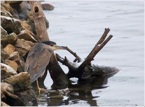 len outlet owl ontario birds and herps a day of niagara hamilton birding