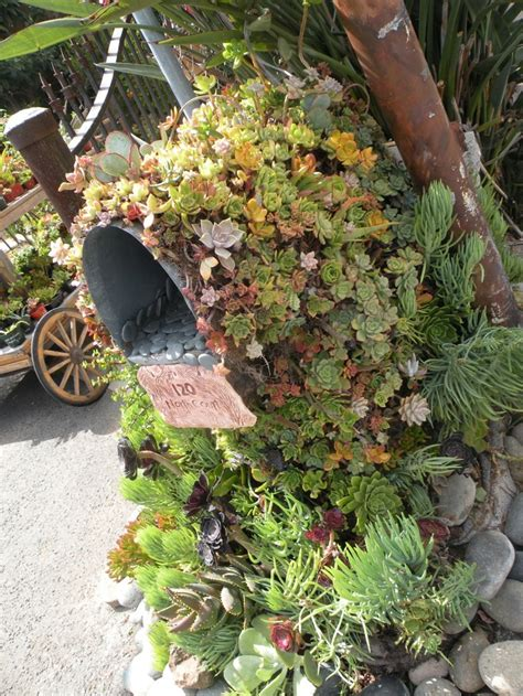 succulents on a mail box guess by this they can be put just anywhere so awesome i love