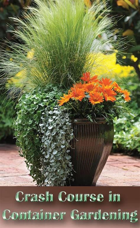 best 25 container gardening ideas on growing