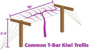 How To Build An Arbor Trellis planting and pruning kiwi organic gardening blog