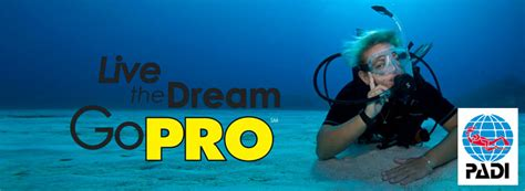 dive master padi divemaster program blue ribbon divers resort