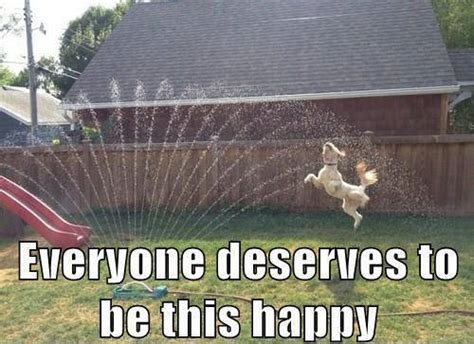 Dog Sprinkler Meme - everyone deserves to be this happy jokes memes pictures