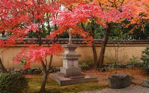 pflanzen japanischer garten 616 pflanzen japanischer garten japanischer garten pflanzen