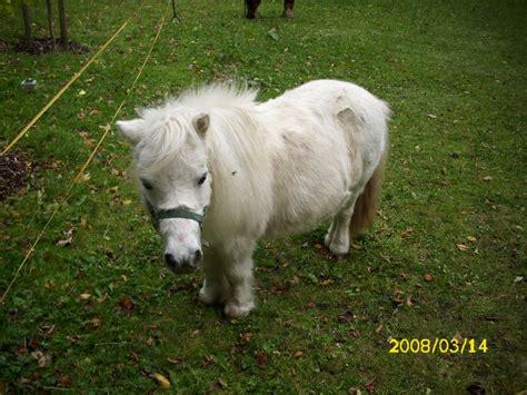 mini pony pin mini pony on