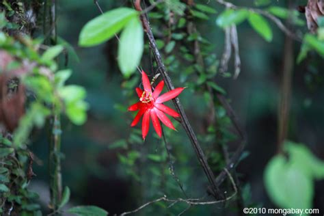 common plants in a tropical rainforest rainforest plants