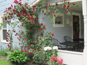rosepointe cottage tea room 55 best things about geauga county geauga news