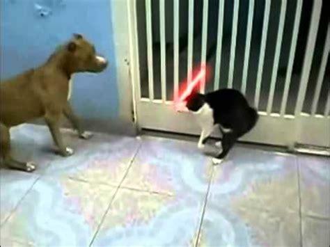 cat vs fight cat vs cat cat fight dogs funnycat tv