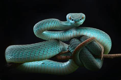 Imágenes y fondos de pantalla de Serpientes, Wallpapers HD