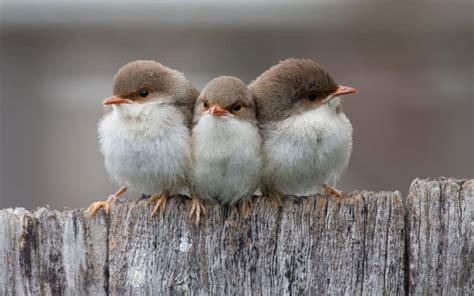 wallpaper cute bird cute birds hd wallpapers 3 jpg free litle pups