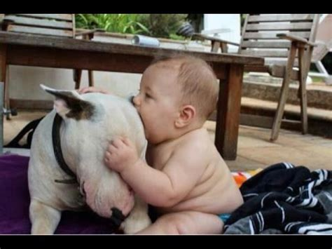 cute dogs and adorable babies compilation youtube funny and cute pitbull dogs love babies compilation 2015