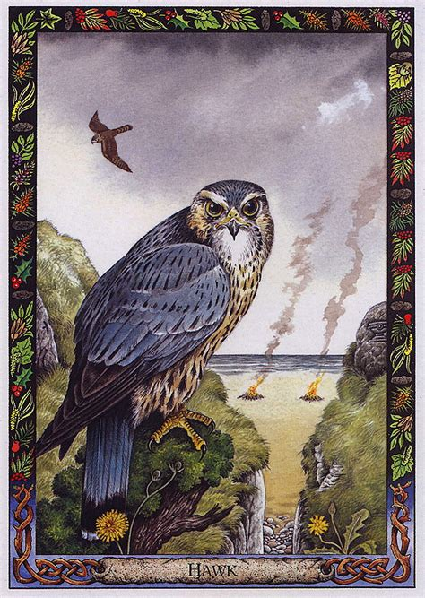 the druid animal oracle 1859060072 lrs the druid animal oracle painted by bill worthington hawk image only