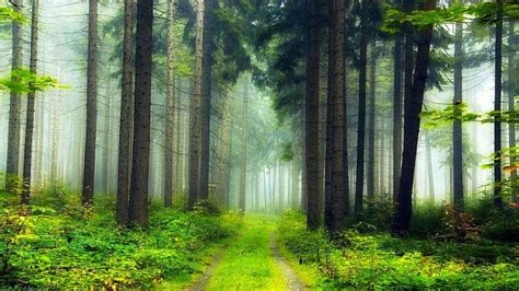 Forest HD Backgrounds   Android Apps on Google Play
