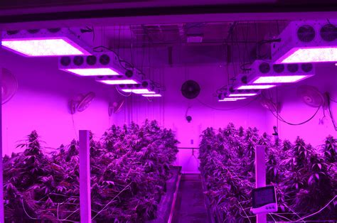 Commercial Led Lights Best Grow Lights Black Led