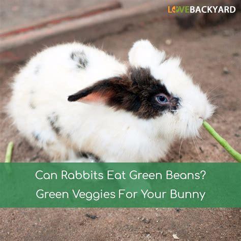 vegetables bunnies can eat can rabbits eat green beans green veggies for your bunny