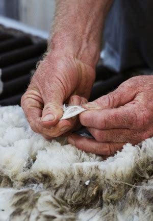 ermenegildo zegna learns the hard way about australian farming