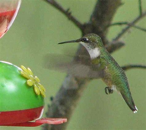 2012 hummingbird season 171 rose cottage ltd