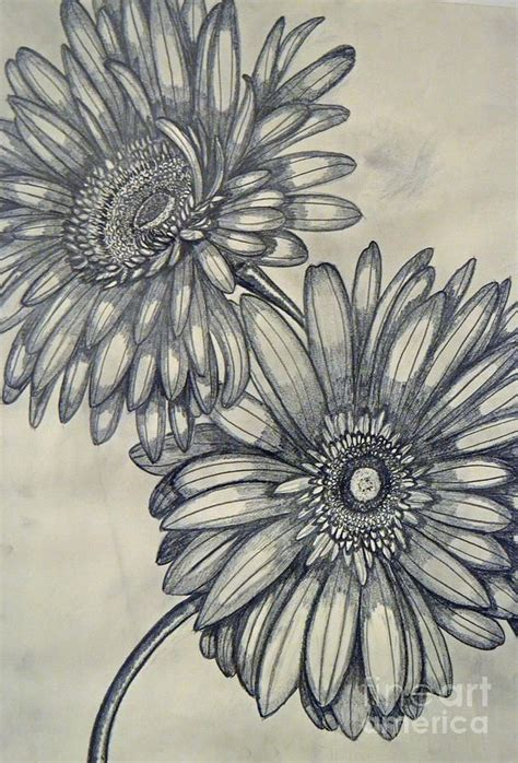 gerbera flower tattoo designs gerbera drawing search designes