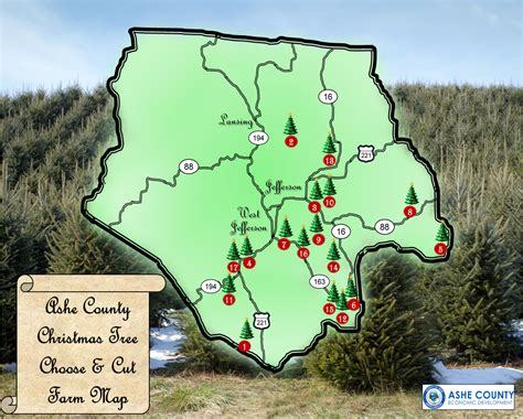 choose cut christmas trees ashe county