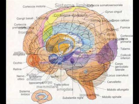valter49 parliamo dell'amigdala e di emozioni dal pdv