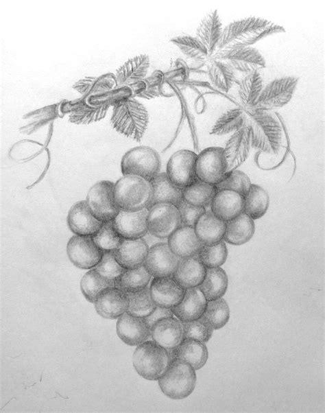 drawn grapes grape leaf pencil and in color drawn grapes drawn grape pencil sketch pencil and in color drawn