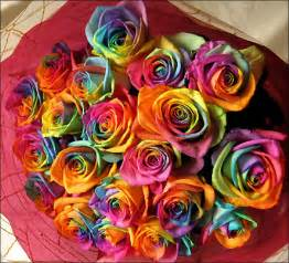 colored roses rainbow roses all colors in one