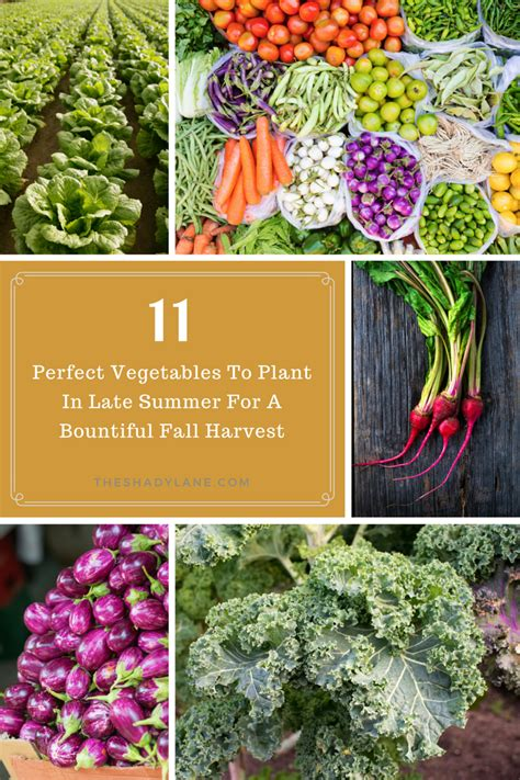 11 perfect vegetables to plant in late summer for a bountiful fall harvest the shady lane