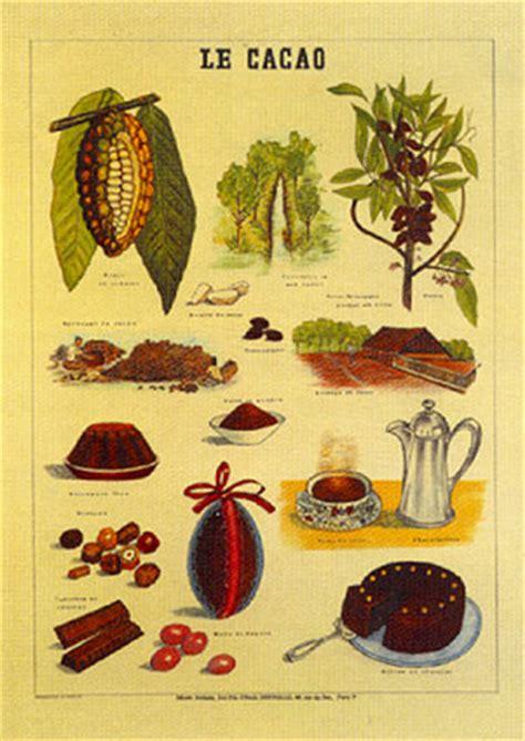 yo soy agr 243 nomo historia cacao