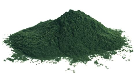 Chlorella Powder wholesale chlorella powder for trade orders supernutrients