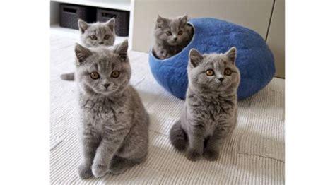 Lu Tidur Big 6 tempat tidur kucing yang praktis dan nyaman lifestyle liputan6