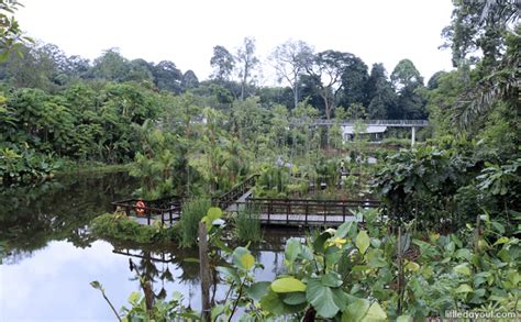 singapore botanic gardens learning forest discover