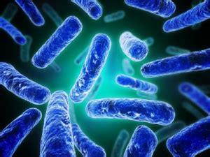 bifidobacterium longum probiotics supplement benefits and