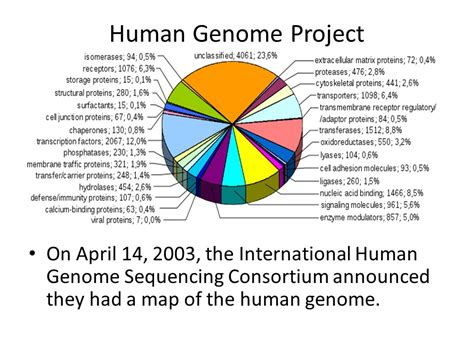 section 13 2 the human genome project lesson 10 bioinformatics ppt video online download