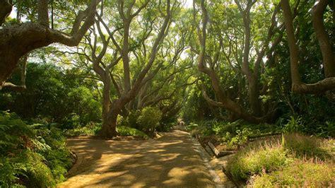 Kirstenbosch Botanical Garden Kirstenbosch National Botanical Gardens In Cape Town Expedia
