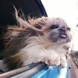 haircut ideas for hair dogs 动物卖萌表情包合集 图片 环球网